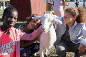 kids goat